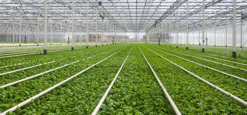 Imagen Dalmau & Martínez - Seguro especial para invernaderos